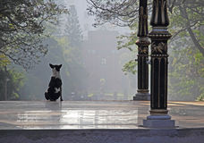 Vigilant Dog on a Misty Morning Stock Photo