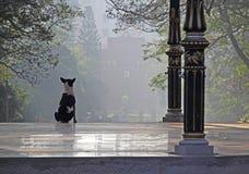 Vigilant Dog on a Misty Morning. Alert and vigilant black and white dog on watch duty on a misty morning Stock Photo