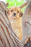 Vigilantehond die van een boom kijken stock foto's