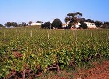 Vigna, Algarve, Portogallo. Fotografie Stock Libere da Diritti