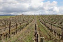 Vigna in Aude, Occitanie nel sud della Francia Fotografie Stock