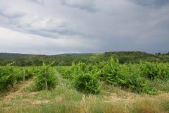 Vigna in Aude, Occitanie nel sud della Francia Immagini Stock Libere da Diritti