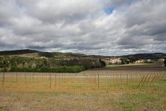 Vigna in Aude, Occitanie nel sud della Francia Fotografia Stock