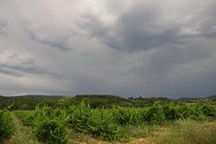 Vigna in Aude, Occitanie nel sud della Francia Fotografia Stock Libera da Diritti