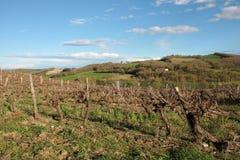 Vigna in Aude, Occitanie nel sud della Francia Immagini Stock