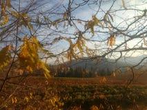 Vigna in autunno Immagine Stock Libera da Diritti
