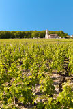 Vigna in Bordeaux, Francia Immagini Stock
