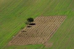 Vigna circondata dal campo verde Immagine Stock