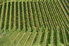 Vigna collinosa #13, Stuttgart Immagini Stock