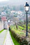Vigna con la vecchia città su fondo in Ribeauville, Francia, Als Immagini Stock
