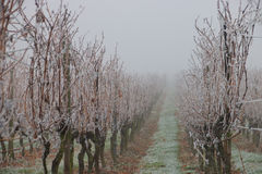 Vigna congelata fotografia stock