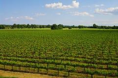 Vigna del Languedoc Immagine Stock