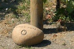 Vigna del pinot bianco fotografia stock libera da diritti