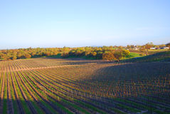Vigna del vino, Napa, California Fotografie Stock Libere da Diritti