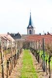 Vigna della primavera con la chiesa su fondo registro in Francia, l'Alsazia Fotografia Stock Libera da Diritti