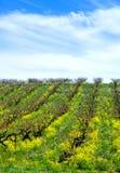 Vigna della primavera nel Michigan Immagini Stock Libere da Diritti