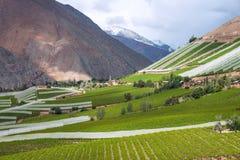 Vigna della primavera Valle di Elqui, le Ande Fotografia Stock