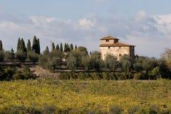 Vigna della Toscana Immagini Stock