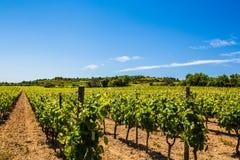 Vigna della vite di fabbricazione di vino in Francia del sud soleggiata con terreno pietroso Fotografia Stock Libera da Diritti