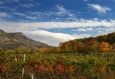 Vigna di autunno immagini stock libere da diritti