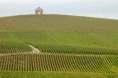 Vigna di Champagne fotografie stock libere da diritti