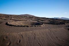 Vigna di Geria della La a Lanzarote Fotografie Stock