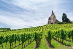 Vigna e chiesa medievale nell'Alsazia, Francia Fotografia Stock Libera da Diritti