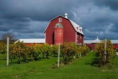 Vigna e granaio, la contea di Door, Wisconsin Immagine Stock