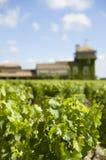 Vigna in Francia, Bordeaux Immagini Stock Libere da Diritti