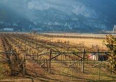 Vigna italiana Fotografie Stock