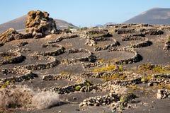 Vigna, Lanzarote, isole Canarie Fotografia Stock