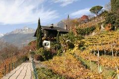 Vigna in Meran, Tirolo del sud Fotografia Stock