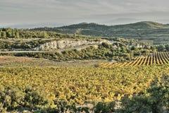 Vigna in Minervois, Occitanie nel sud della Francia Fotografia Stock