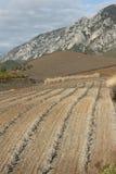 Vigna nel sud della Francia Fotografia Stock
