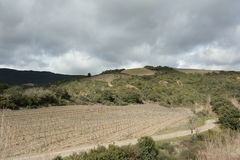 Vigna nel sud della Francia Immagini Stock Libere da Diritti