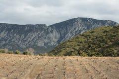 Vigna nel sud della Francia Immagini Stock