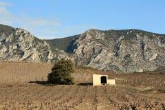 Vigna nel sud della Francia Fotografie Stock