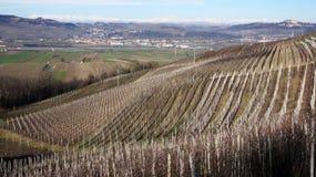 Vigna nel villaggio del d'Alba di Serralunga Fotografia Stock