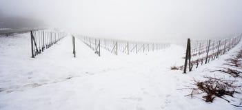 Vigna nella regione Piemonte del langhe di inverno coperto di neve e Immagine Stock