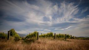 Vigna organica sotto il cielo drammatico Fotografie Stock Libere da Diritti