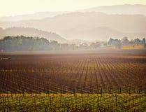 Vigna, paese di vino del Napa Valley, California Immagini Stock