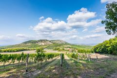 Vigna a Palava alla repubblica Ceca, al parco nazionale, al vino ed all'agricoltura, cielo di estate con le nuvole bianche Fotografia Stock Libera da Diritti