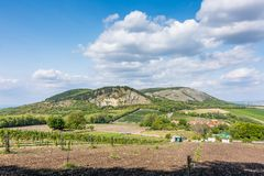 Vigna a Palava alla repubblica Ceca, al parco nazionale, al vino ed all'agricoltura, cielo di estate con le nuvole bianche immagini stock