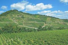 Vigna, regione del vino di Kaiserstuhl, foresta nera, Germania Immagine Stock