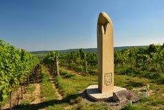 Vigna Regione del vino, Moravia del sud - repubblica Ceca Fotografia Stock