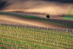 Vigna sopra la città Velke Bilovice, Moravia del sud, repubblica Ceca Fotografia Stock