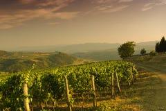Vigna sulle colline del Chianti in Toscana durante l'estate Immagini Stock