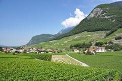 Vigna, Svizzera Fotografia Stock Libera da Diritti
