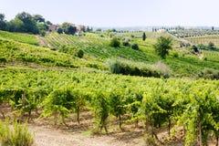 Vigna in Toscana Fotografia Stock Libera da Diritti