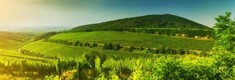 Vigna in Ungheria, vista di panorama Fotografie Stock Libere da Diritti